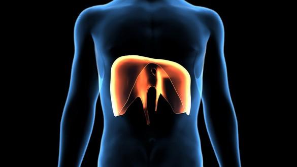 Vision 3D du diaphragme plenoy m /shutterstock.com