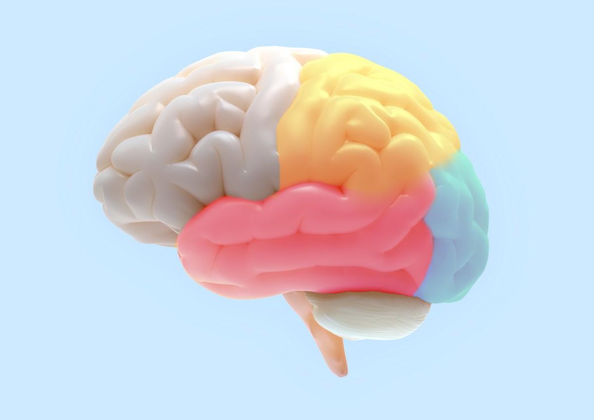 Le cerveau incorpore les outils comme une partie du corps