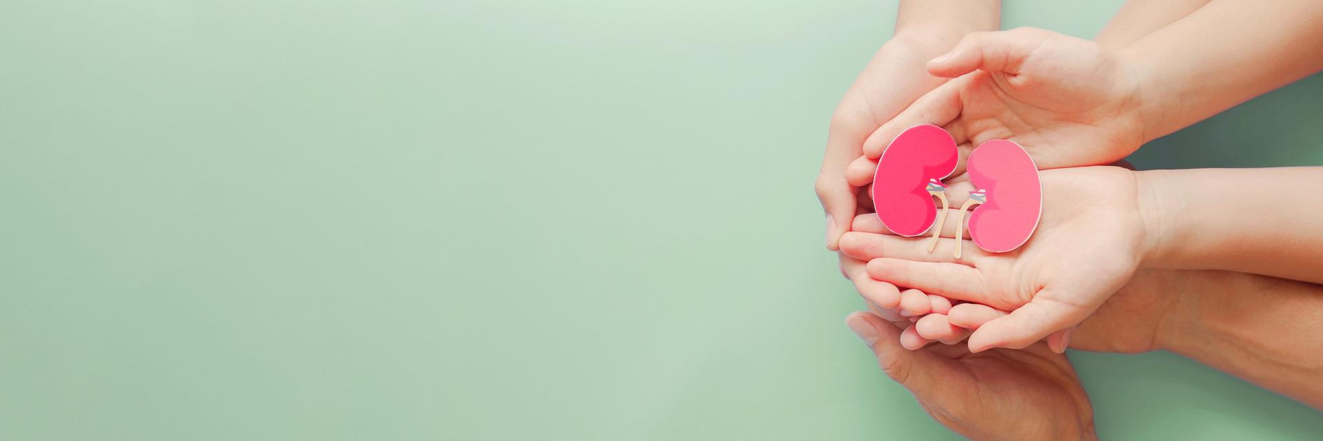 Quel que soit son âge, un même donneur peut sauver trois vies. Un point souligné par l'Agence de la biomédecine (ABM) ce 22 juin, à l'occasion de la